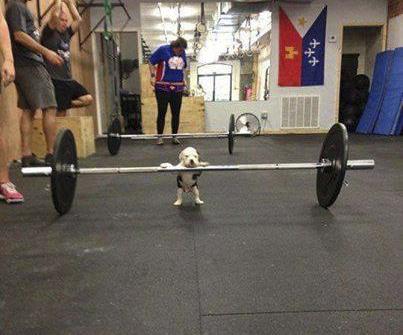 Ejercicio perro pitbull