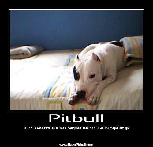 Imagenes Con Frases Sobre Los Perros Pitbull